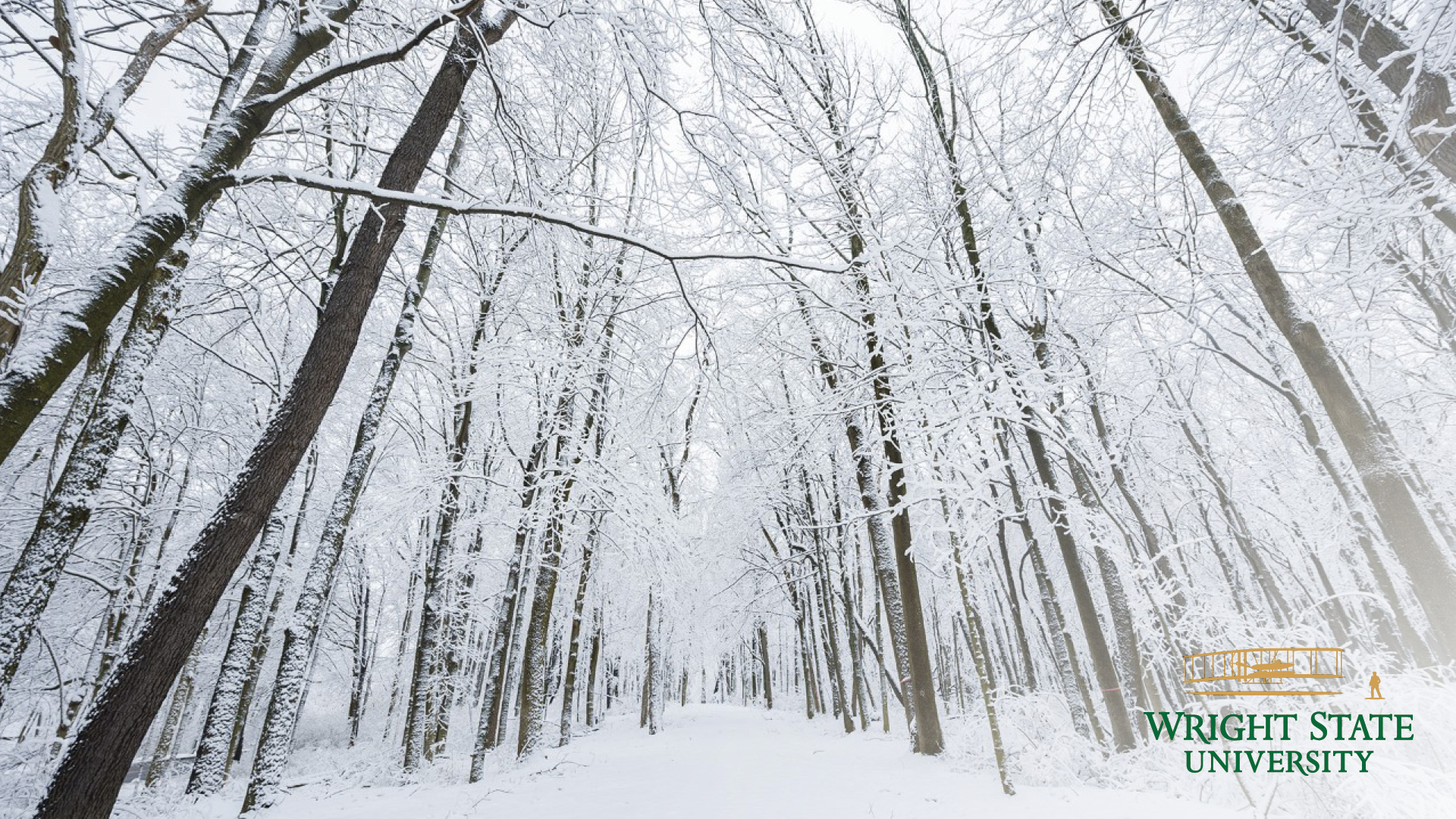 photo of snowy campus woods