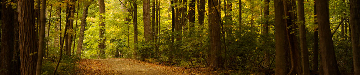 photo of the woods on campus