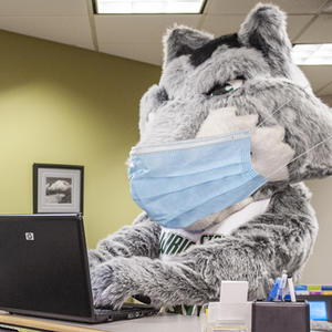 Rowdy wearing a mask working at a laptop